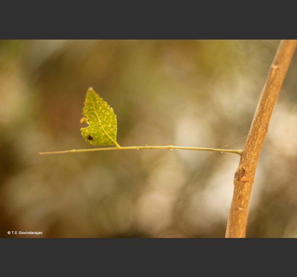 LLAOnline - Participants - T.E-Govindarajan Photography